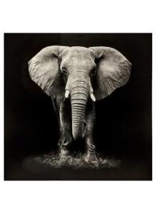 Tablou canvas Elefant...
